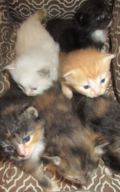 6 Kittens-READY TO BE ADOPTED MID-SEPTEMBER