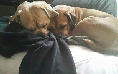 DAISY & MYLO